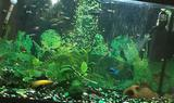 126 л. аквариум с тумбой